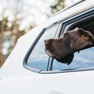 Inicio - transporte mascotas