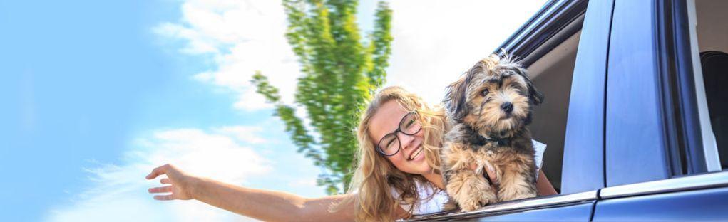 Transporte de mascotas - traslado de mascotas 2