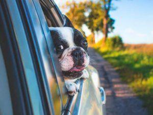 ¿Puedo ir en taxi con un perro? - Puedo ir en taxi con mi perro 300x225